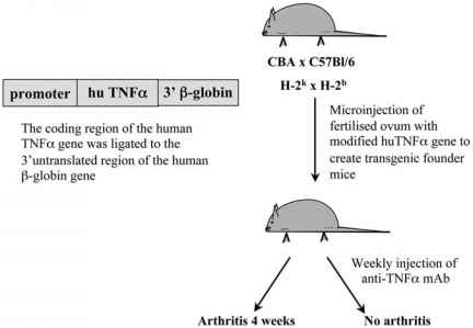 The Role of Proinflammatory Cytokines in Arthritis - Cancer