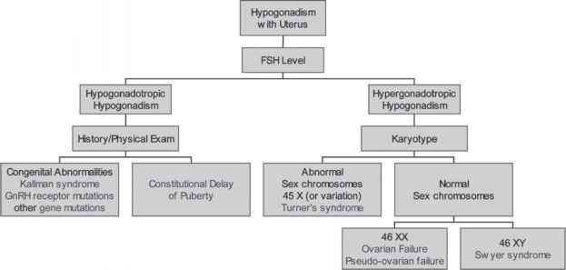Environmental Causes Amenorrhea
