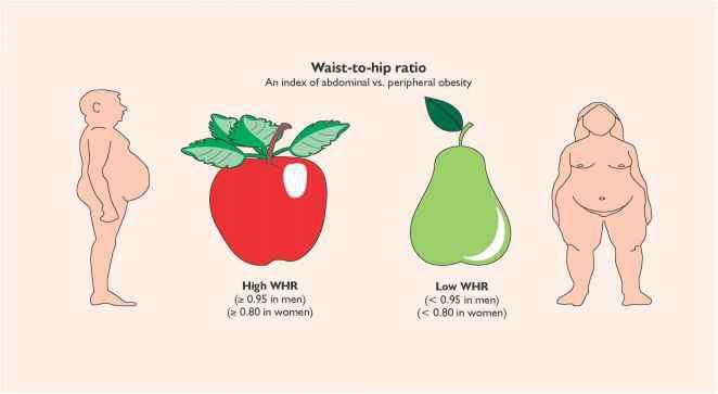 Body Fat Distribution - Insulin Resistance - Arthritis Research
