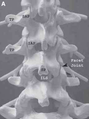 Spinal Process Image